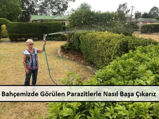 Evimizde veya Bahçemizde Görülen Parazitlerle Nasıl Başa Çıkarız