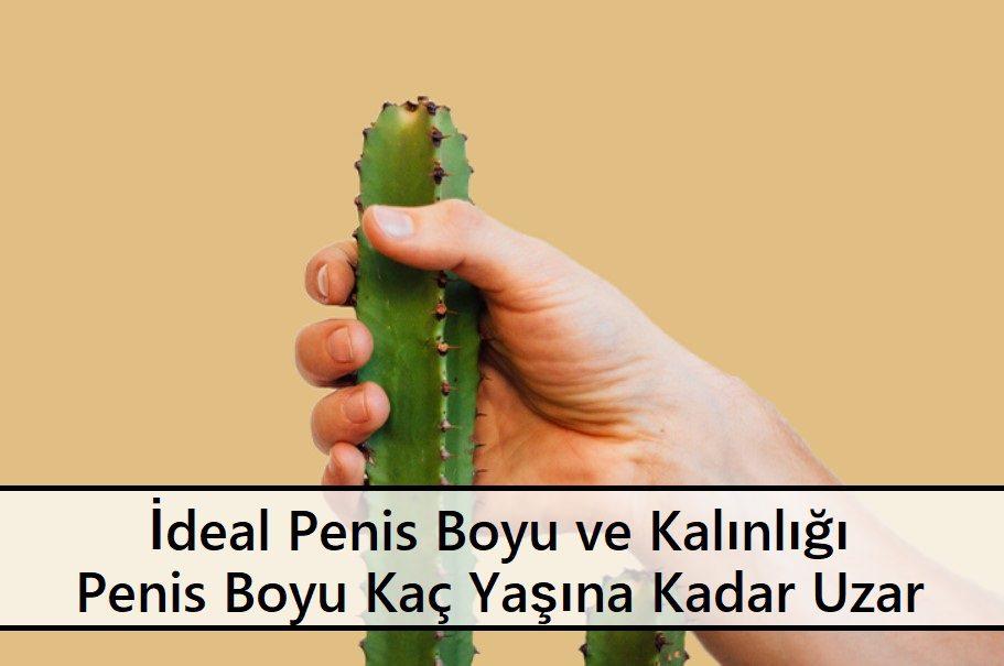 İdeal Penis Boyu ve Kalınlığı Penis Boyu Kaç Yaşına Kadar Uzar