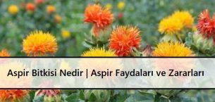 Aspir Bitkisi Nedir | Aspir Faydaları Ve Zararları