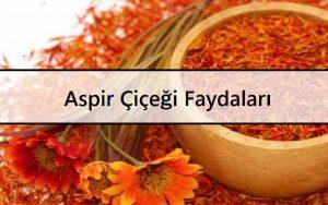 Aspir Çiçeği Faydaları